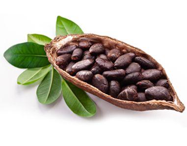 Les vertus cosmétiques du cacao dans les cosmétiques au beurre et à la poudre de cacao bio