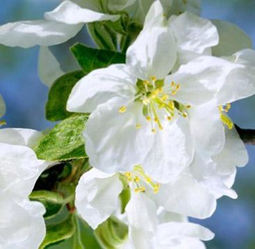 Blog Clairjoie : le retour du printemps !