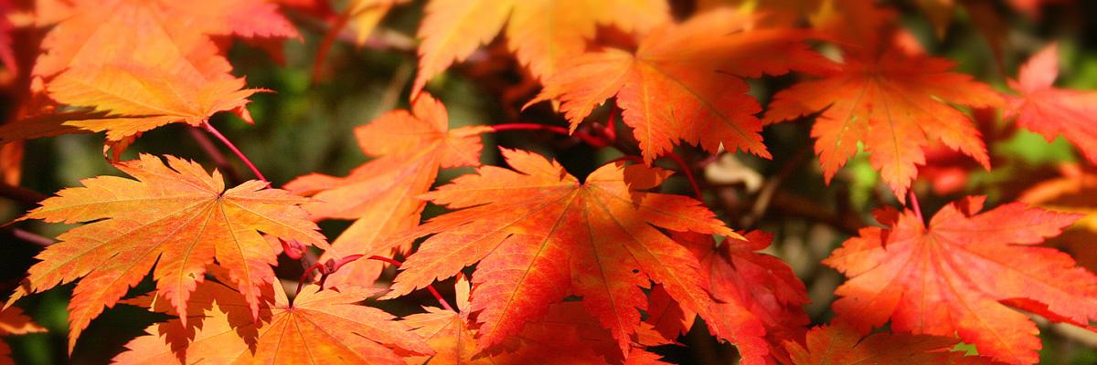 C'est l'automne... Clairjoie est là pour vou sle faire aimer !