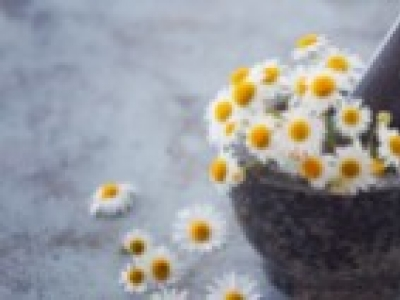 Beauty is in the garden-chamomile